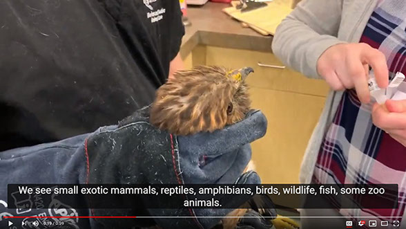 Avian & Exotic Animal Care In-Service