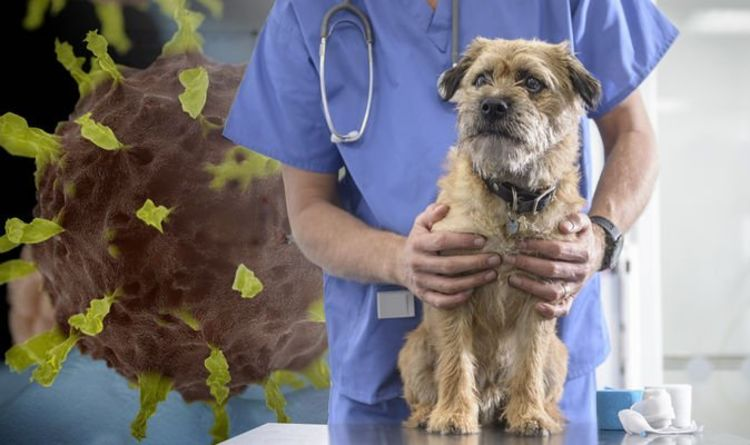 Veterinarian caring for dog
