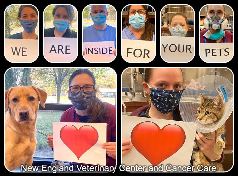 New England Veterinary Center and Cancer Care CT Newsbrief