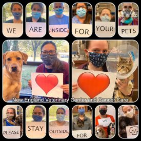 New England Veterinary Center and Cancer Care CT